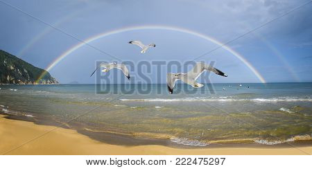 Seascape with a rainbow and seagulls, rejoicing the existence