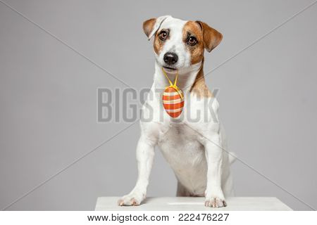 Dog with Easter egg. Happy pet