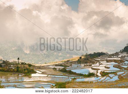 Dawn on rice terraces in Xinjie Zhena in Yunnan