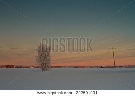 Lonely Tree Covered With Snow