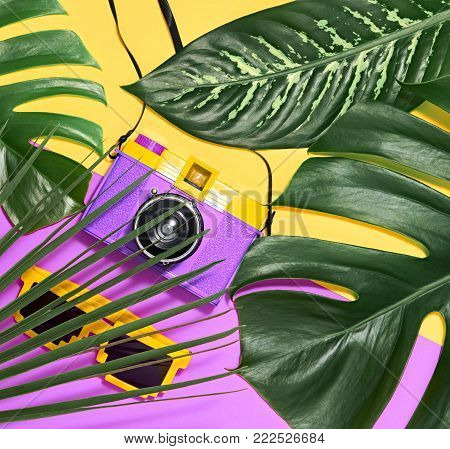 Tropical Palm Green Leaves Background. Colorful Yellow Purple Summer Vibes. Fashion concept. Trendy Sunglasses, fashion Hipster Accessories. Retro Design camera