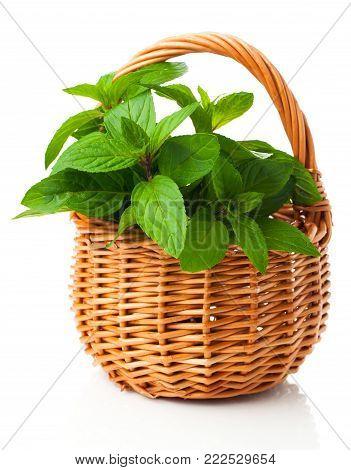 fresh mint in a wicker basket, on a white background