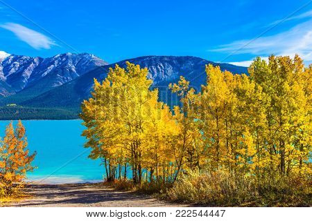 The sunny autumn in the Rockies of Canada. Incredibly beautiful Abraham lake with a turquoise water. On the shores there are autumn forests. Concept of ecological and active tourism