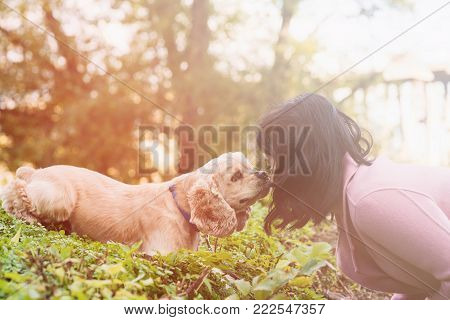 Asian woman training her dog in park. American cocker spaniel lies and licking girl's face.