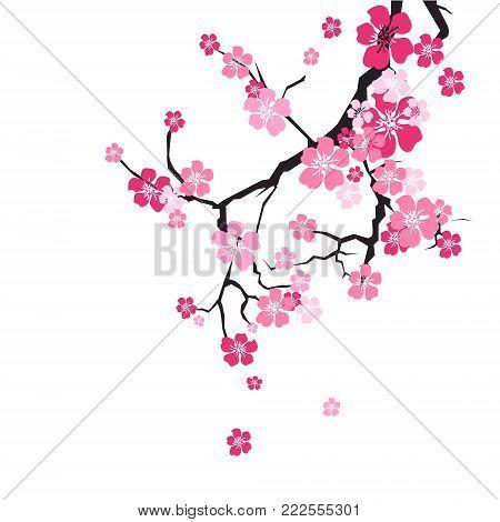 Cherry Blossom Background Sakura Flowers Pink On Branch Flat Vector Illustration