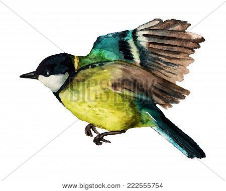 Watercolor Flying Great Tit