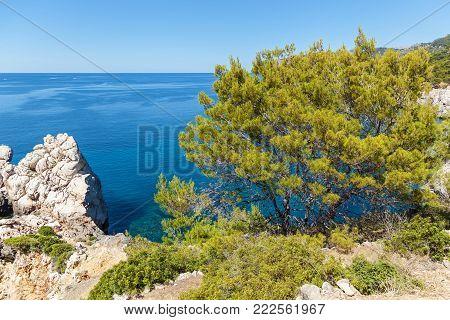 Palma de Mallorca, the sea against the background of wood and rocks. the sea on Palma de Mallorca