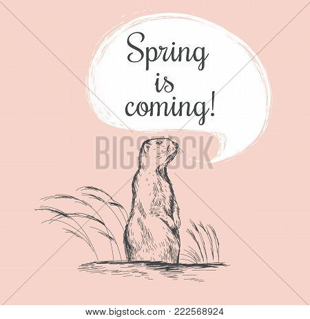 Marmot sketch vector illustration. Spring is coming. Vector Happy Groundhog Day sketched illustration. February 2 greeting holiday poster or card etc.