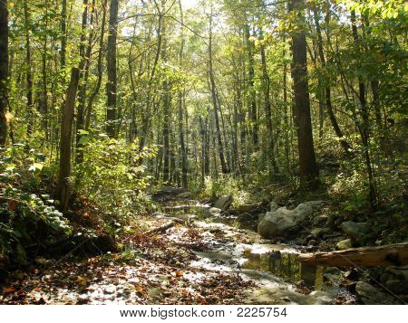 Deep in Monte Sano state park. A
