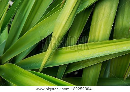 Long Narrow Spiky Interwoven Palm Tree Leaves Tropical Foliage Pattern. Poster Banner Template Background. Exotic Vacation Tourism Wanderlust Concept