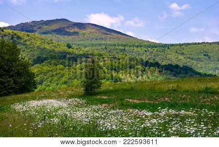 grassy rural field at the foot of the mountain. lovely countryside scenery in summertim