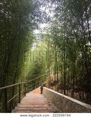 Stairway at a bamboo trail in a cloudy day. View of a peaceful bamboo trail