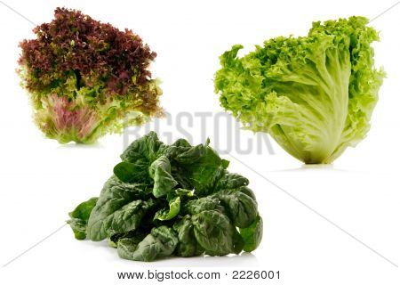 Lettuce And Spinach