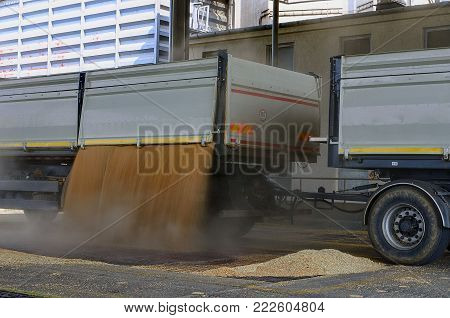SAKVICE, THE CZECH REPUBLIC - AUGUST 5, 2016: Just harvested corn inside a trailer. Grain poured from truck - lorry into a silo for processing