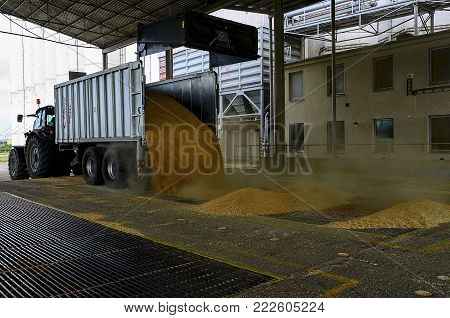 SAKVICE, THE CZECH REPUBLIC - AUGUST 5, 2016: Just harvested corn inside a trailer. Grain poured from trailer into a silo for processing