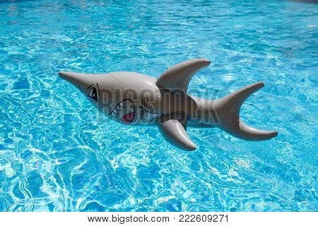 inflatable shark floating in a swimming pool