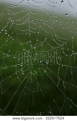 Spider web with drops of morning dew