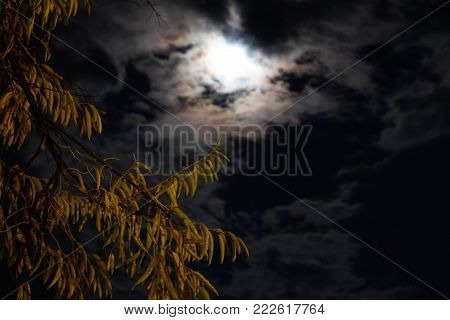 A cloudy sky and moonlight under the tree.