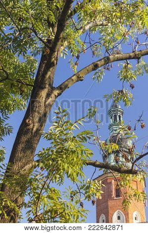 Poland Radom, St John the Baptist Church tower behind a tree, sunlit, morning