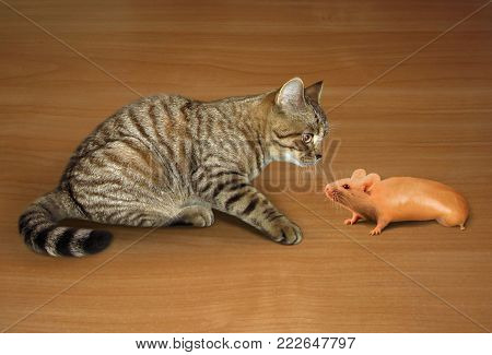 The cat looks at a strange mouse that looks like a sausage.