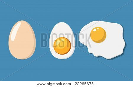 Fried, half and eggs in shell. Eggs isolated on background. Vector illustration in flat style