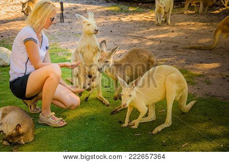 A young caucasian woman feeds adult Kangaroo and his joey at Caversham Wildlife Park in Whiteman, near Perth, Western Australia. poster