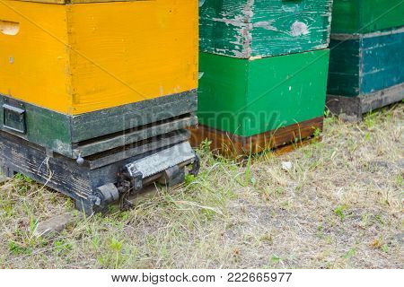 Hive is placed on a weighing scale to estimating bee's efficiency in producing honey, measuring weight.