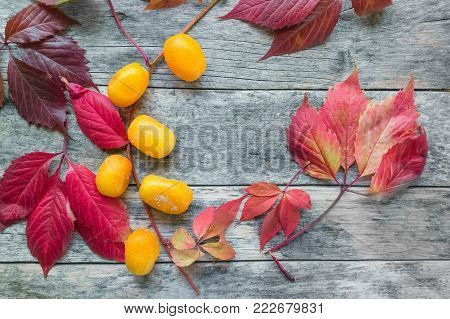 A large yellow dried sweet kumquats with beautiful autumn red leaves close-up. The horizontal frame.