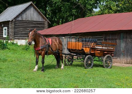 Horse Is Prepared For Horse Walks In The Park In The Estate Of Count Leo Tolstoy In Yasnaya Polyana