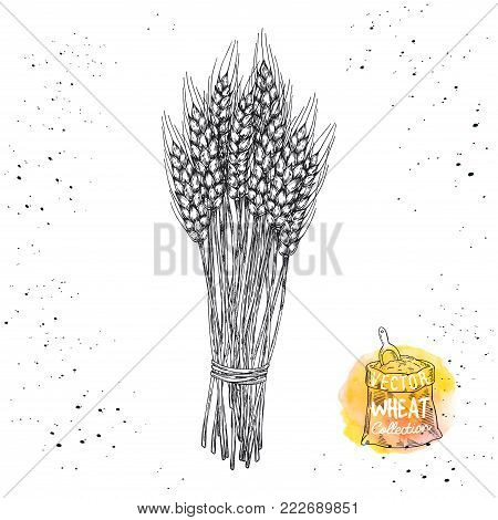 Sheaf of wheat print. Agriculture theme concept.
