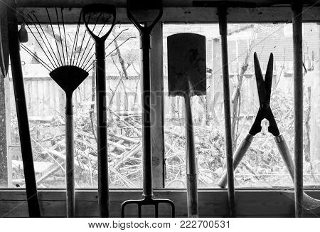 Garden tools hanging up in a shed, the tools are sillouetted by the shed window and view of garden behind, Garden spade, fork, shears etc black and white photograph