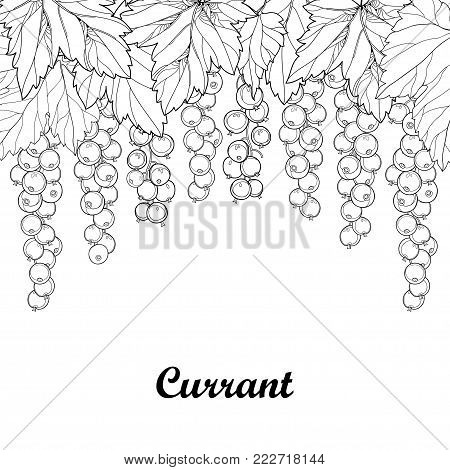 Vector bunch with outline Red currant berry and leaves in black isolated on white background. Floral composition with redcurrant fruit in contour style for summer design and coloring book.