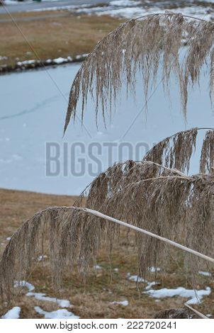 Summerville SC pond in January with pampas grass and melting snow
