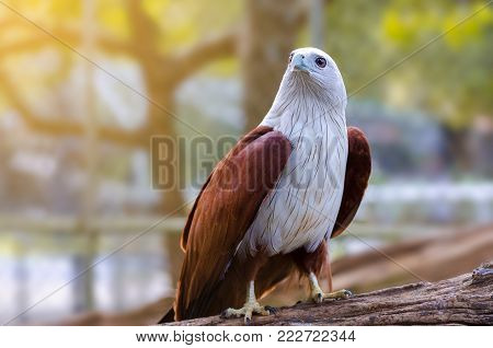Bird falcon white sitting bosom nestled on a green and orange background.
