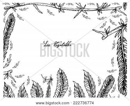 Sea Vegetables, Illustration Frame of Hand Drawn Sketch Killer Algae or Caulerpa Taxifoli Seaweed Isolated on White Background.