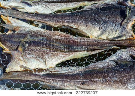 Salt cod drying on racks.