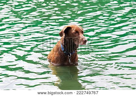 A dog sitting obediently in the water waiting to play.