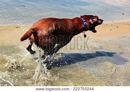 A dog chasing flies by the water.