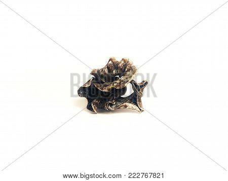 Dried Potpourri Flower Bark on White Background