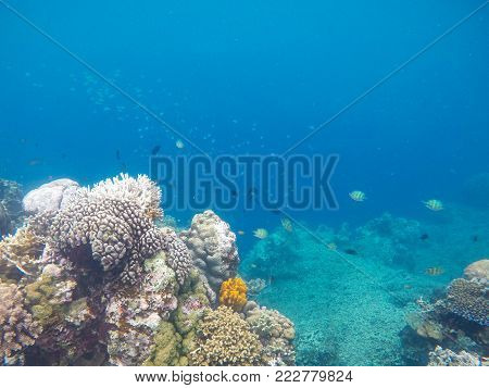 White coral on tropical sea bottom. Blue sea water and coral reef. Coral reef animals. Exotic island lagoon snorkeling and diving. Tropical seashore underwater photo. Coral reef undersea landscape