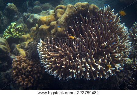 Yellow fish in tropical seashore underwater photo. Coral reef animal. Warm sea shore nature. Colorful sea fish and coral. Undersea view of marine life. Coral reef landscape. Shallow water snorkeling