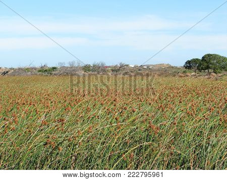 BULRUSHES STRETCHING ACROSS THE FORE GROUND AND ROCKS, HILLS AND BUSHES IN THE BACK GROUND