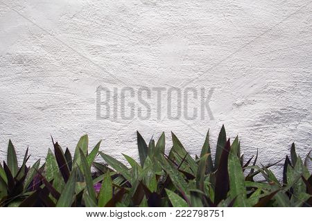 White painted wall with floral foreground. Green foliage of tropical plant on white wall texture background. Painted plaster wall texture. Brushed surface of concrete wall. Green leaf frame banner
