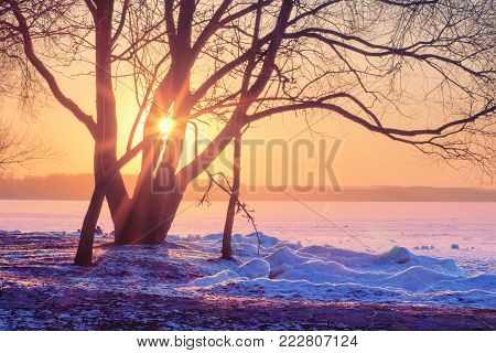 bright winter sunset over frozen ice lake covered with snow. Winter landscape with branchy tree on shore of lake. sun's rays shine through the tree.