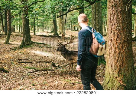 A man looks at a wild deer in a natural habitat. Animal
