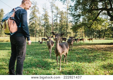 A man looks at young deer in a natural habitat
