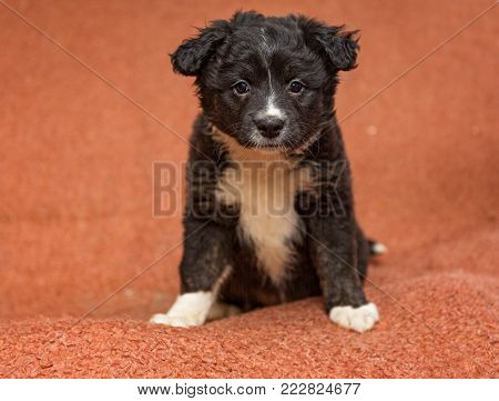 Small mongrel puppy sitting on a red Mat