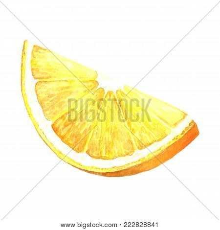 Watercolor image of orange fruit. Citrus fruits sliced. Illustration of citrus foliage. Handmade drawing. Isolated image on white background.