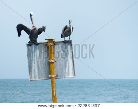 two pelicans roosting on a sign in the middle of the sea