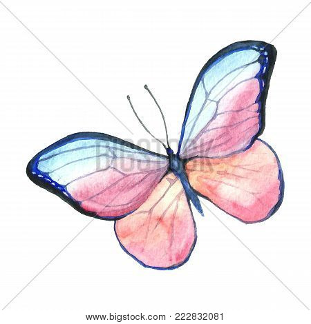 Watercolor image of a butterfly on a white background. Isolated insect pattern with wings. Butterfly close-up. Handmade illustration. Animal world of insects. Wildlife cliparts.